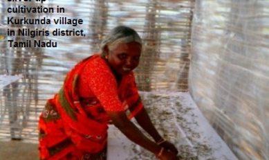 Small Tribal Tea Farms emerging as Knowledge Banks