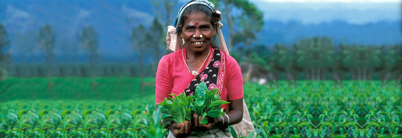 Woman with tea leaves under Where The Rain Falls (WTRF) Project- CARE India