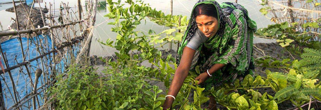 Saraswati Rayar