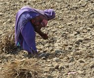 Climate Change Adaptation of women smallholders and Cotton Producers from Vidarbha region, India (CCACP)